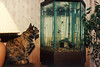December 26, 2009.   Lady and the fish. 
